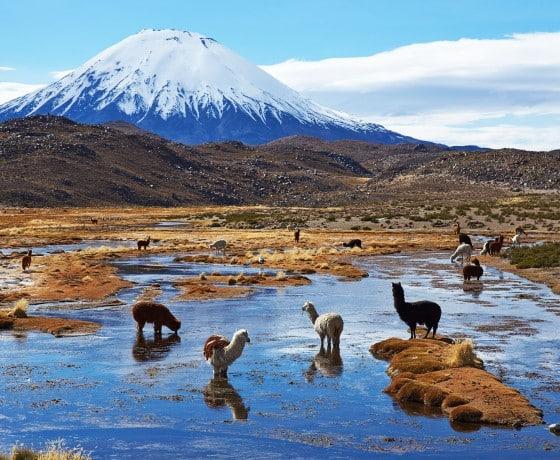 Découvre la Patagonie pendant ton stage en Amérique Latine !