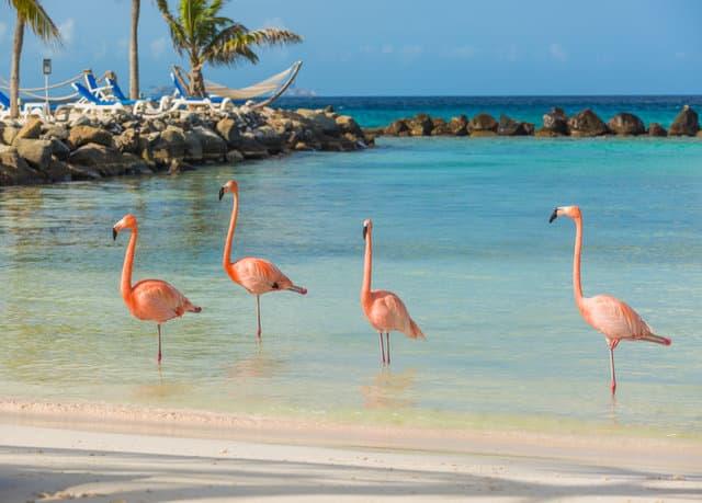 L'île aux flamants roses à explorer pendant ton stage en Amérique Latine !