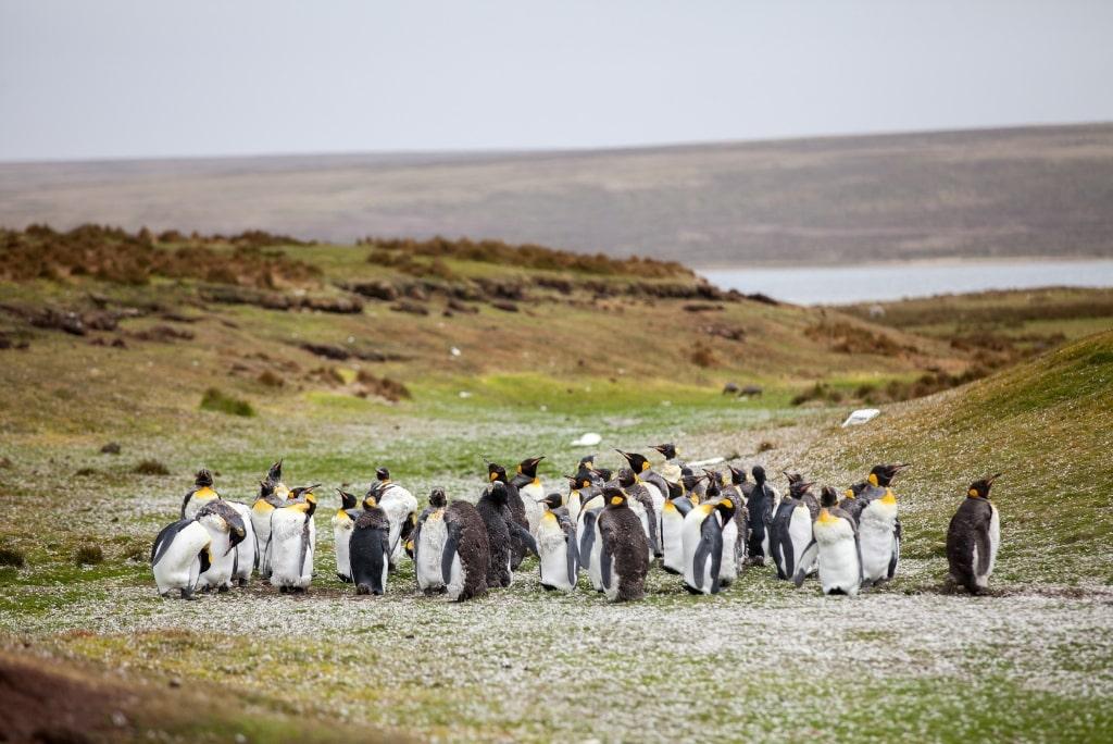 Les Malouines, un paradis sauvage à explorer pendant ton stage en Amérique du Sud !