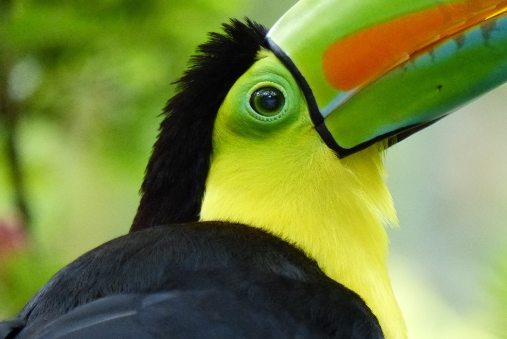 Les animaux à observer pendant ton stage au Costa Rica!