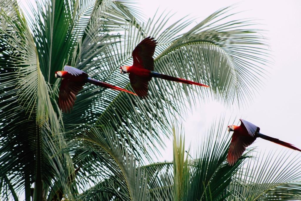 5 bonnes raisons de partir faire ton stage au Costa Rica