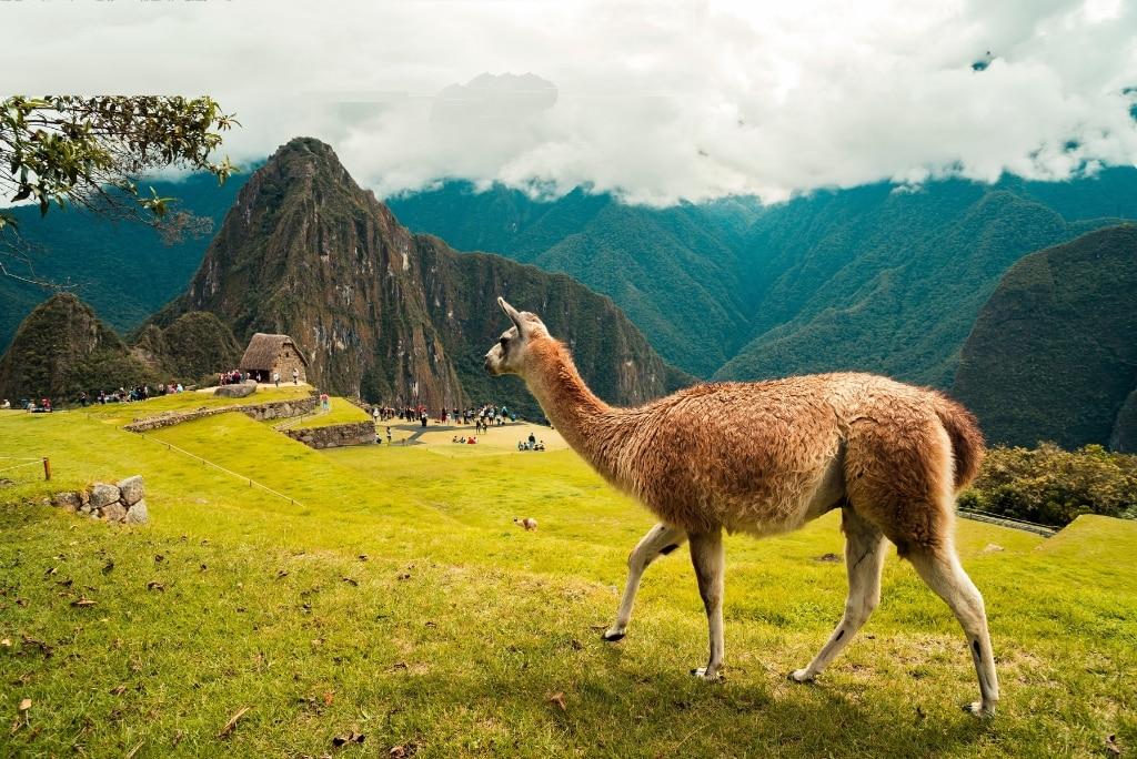 Top des expériences à vivre durant ton stage au Pérou !