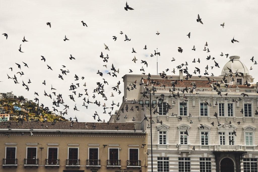 A la découverte de Quito pendant ton stage en Amérique du Sud